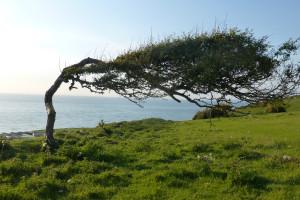 Llais tawel Dafydd Pritchard