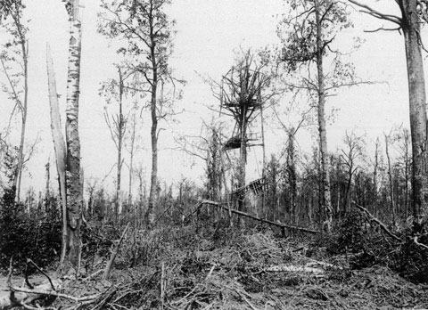 mametz wood The battle of mametz wood is perhaps one of the lesser known tragedies of the first world war during an era where young soldiers, swollen with their own.