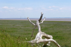 Wales Coast Path, day 2: Caldicot from Goldcliff
