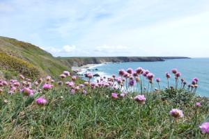 Pembrokeshire Coast Path, day 11