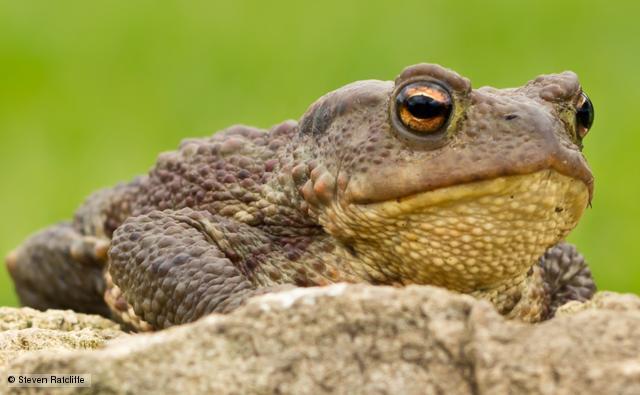 orwell s toads gwallter